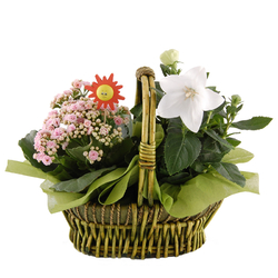 Koszyk kwiatów doniczkowych Telekwiaciarnia